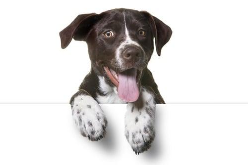 Pets and Vets Webinar